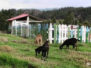 Fundación Bios Terrae